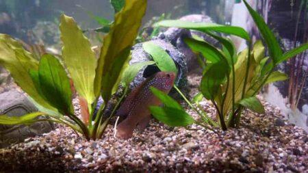 akvárium háttér házilag